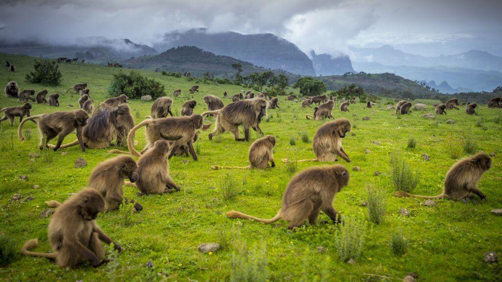 wildlife in Ethiopia